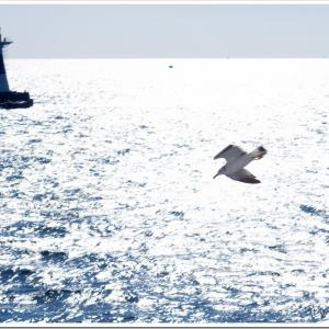 Photogenic Seagulls 283
