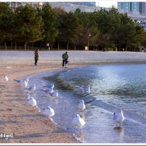 Photogenic Seagulls 284