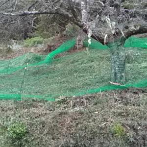 猪防御ネット