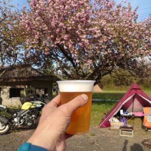キャンプ村やなせで八重桜花見キャンプ!後編。