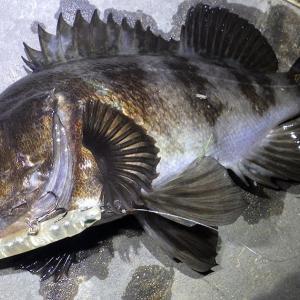 釣行 メバル220[ 内房 ] シャローの明暗に差してくる魚を狙う