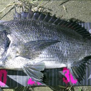釣行 クロダイ74[ 湾奥 ] 南風で苦戦の河川チニング