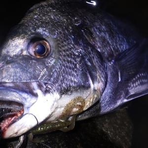 釣行 クロダイ81[ 湾奥 ] 雨が降る前に大型河川で1時間ちょい
