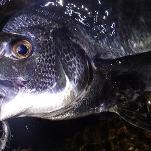 釣行 クロダイ85[ 湾奥 ] 釣りおじさん、チニングで新しい扉を開く
