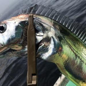 釣行 太刀魚18[ 東京湾 ] 初の天秤仕掛けにチャレンジ@吉野屋