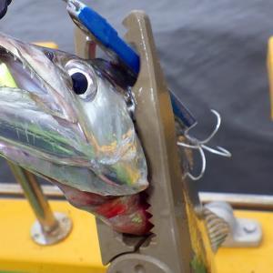 釣行 太刀魚19[ 東京湾 ]浅場の夏タチで無事死亡@渡辺釣船店