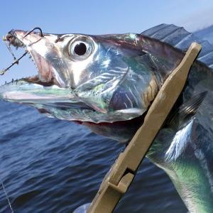 釣行 太刀魚20[ 東京湾 ] 2回目の天秤太刀魚どうでしょう@いなの丸
