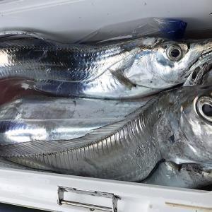 釣行 太刀魚21[ 東京湾 ] タチウオテンヤがいろいろやばかった件@いなの丸