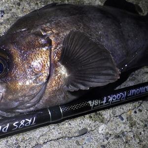 釣行 メバル245[ 内房 ] ウネリ強で苦戦のメバリング