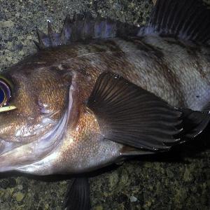 釣行 メバル246[ 内房 ] ネギだく海面を玉と汁で攻略