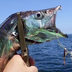 釣行 太刀魚23[ 東京湾 ] 今年もドラゴン乱舞のタチウオテンヤ@いなの丸