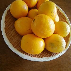シトラスポン酢 季節の保存食