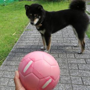 新しいボール&初スイカ♪