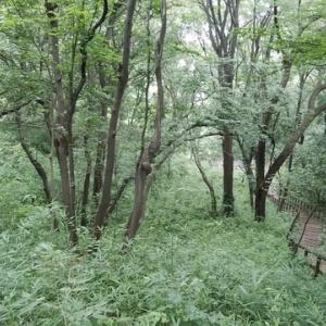 雨後の生田緑地