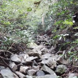 山歩き(沢登り?)〜キノコ採り