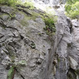 二子山中央稜の予定が2