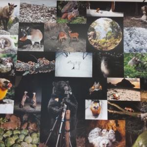 イマドキの野生動物