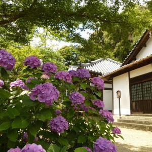 【大和郡山◇矢田寺の紫陽花を愛でる】
