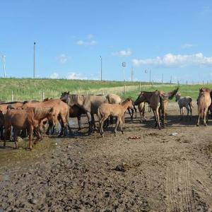 草原の動物