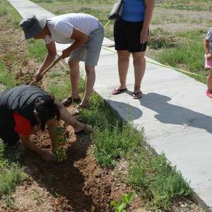 草原の学校で植林活動