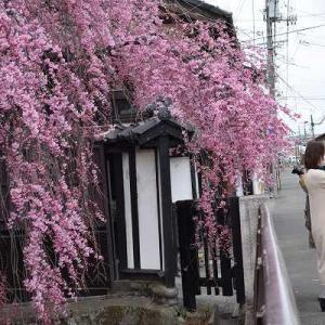 桜の花が咲くころは嬉しさと寂しさがいっぺんにやってくる