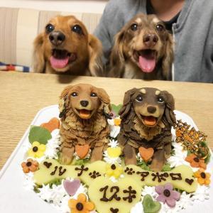 12歳の誕生日おめでとう!!