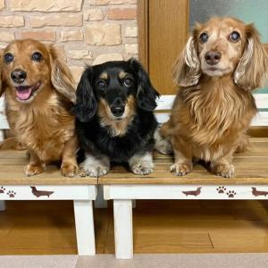 可愛い犬用ベンチが届いたよ