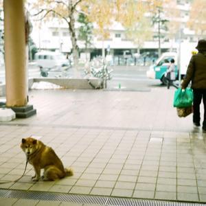 飼い主を待つ老犬