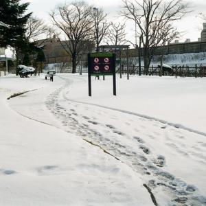 薄雪ならではの寒いこの頃と階段歩行降下