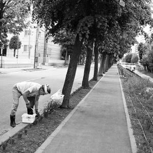 マンション管理人の植栽管理