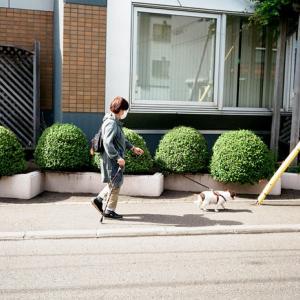 長袖が欲しかった犬の散歩と一転して夏の到来