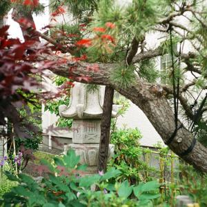 茶道教室の庭