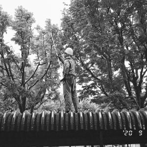 ナナカマドの密な枝葉の剪定と藪だらけの新政権
