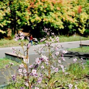 今シーズンの掉尾を飾る花々