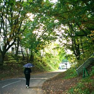 晩秋の林陰道と落葉の公園