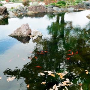 金魚と庭石
