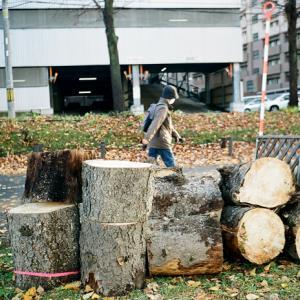 伐採木と定足数を満たすだけの会議出席