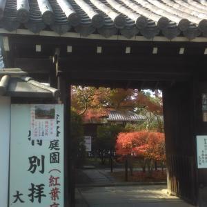 京都市内の紅葉状況(11月23日現在)