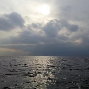 相模湾ヤリイカVIII