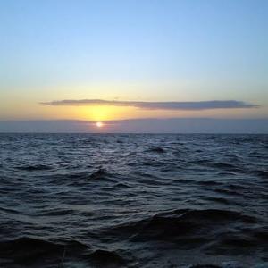 相模湾のヤリイカへ行ってきました V