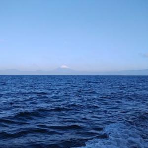 相模湾のスルメ行ってきました
