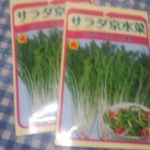 水菜明日種まきます