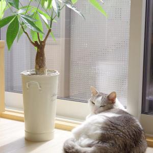 猫がいつでも主人公