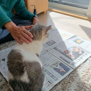 猫を使って試し撮り