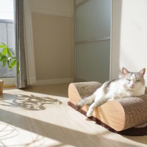 太陽熱で緩む猫