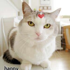 とりあえずバレンタインな猫