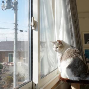 春の猫を傍観する猫