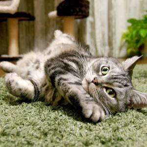 きっと今でものんきな猫