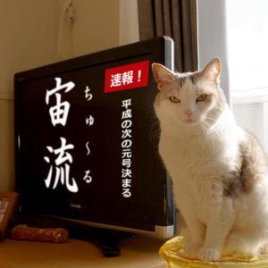 猫による決定
