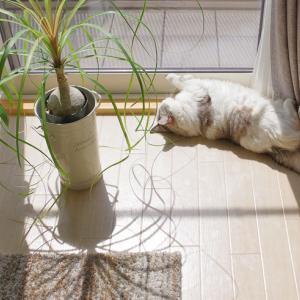 猫は留守番